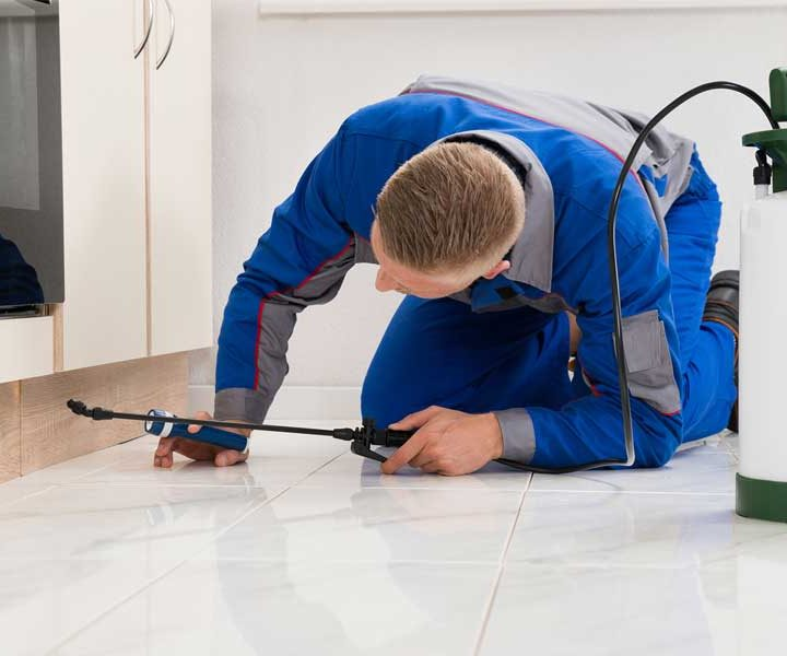 Pest Control & Removal in Bellevue