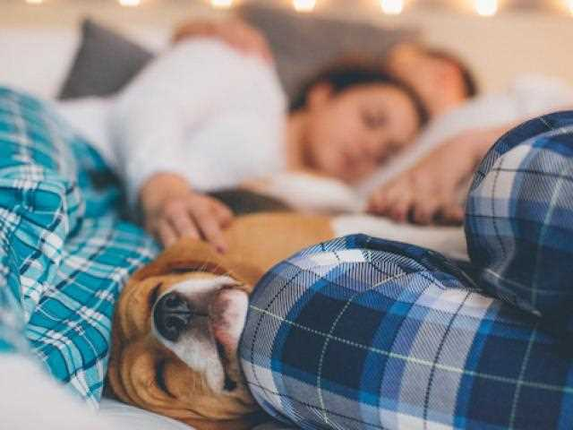 Fighting Dog Cancer
